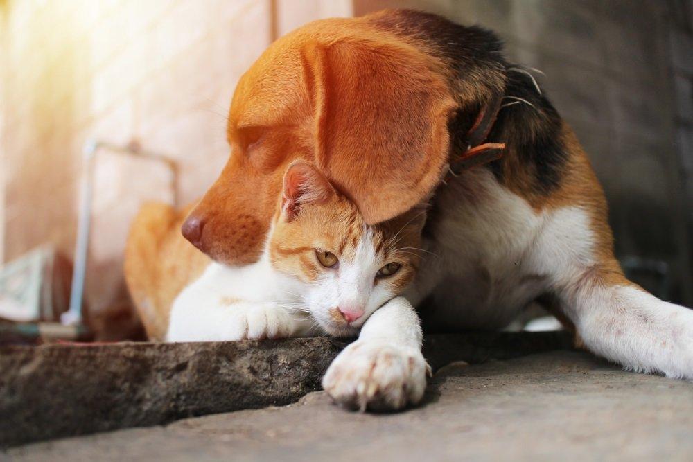 Квартирник 30.11.2019 «Всемирный день домашних животных»